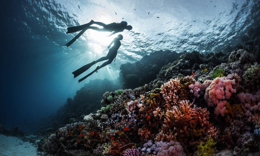 [Phú Quốc] Tour Câu cá - Lặn ngắm san hô Nam Đảo cho 1 người